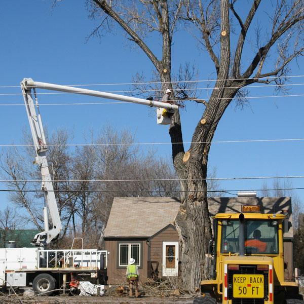Tree Maintenance near Power Lines